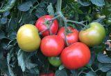 Monsanto Vegetales, un firme compromiso