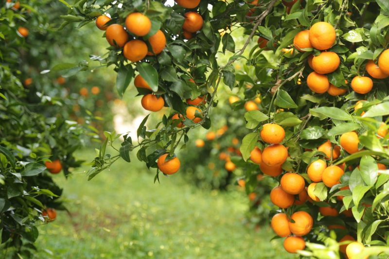 Orc presents its new app at fruit attraction fruittoday - Mandarina home espana ...