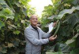 Hazera, an upcoming global cucumber specialist