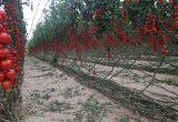 Cajamar, referente en financión del sector agroalimentario con el 15% del mercado nacional