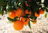 Grupo Agrotecnología cerró 2016 con un crecimiento del 25%