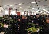 La tv pública japonesa se interesa por los tomates de Agrupalmería