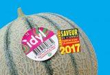 Strong start to Idyl's melon season!