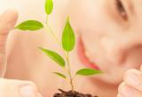 """Los avances en genética abren paso a la """"segunda revolución verde"""""""