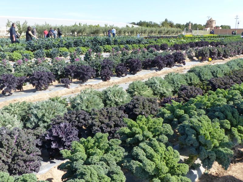 P1000833 fruittoday for Catalogo lidl almeria