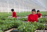 El Plantel Semilleros amplía y mejora su sede de Níjar sumando 2 Has más y nueva maquinaria