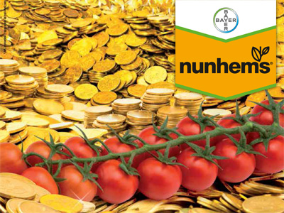 Bayer NUNHEMS BAYER tomate Sintonia