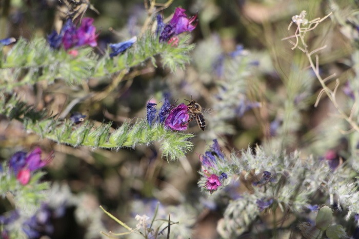 bandas florales SURINVER GREENYARD