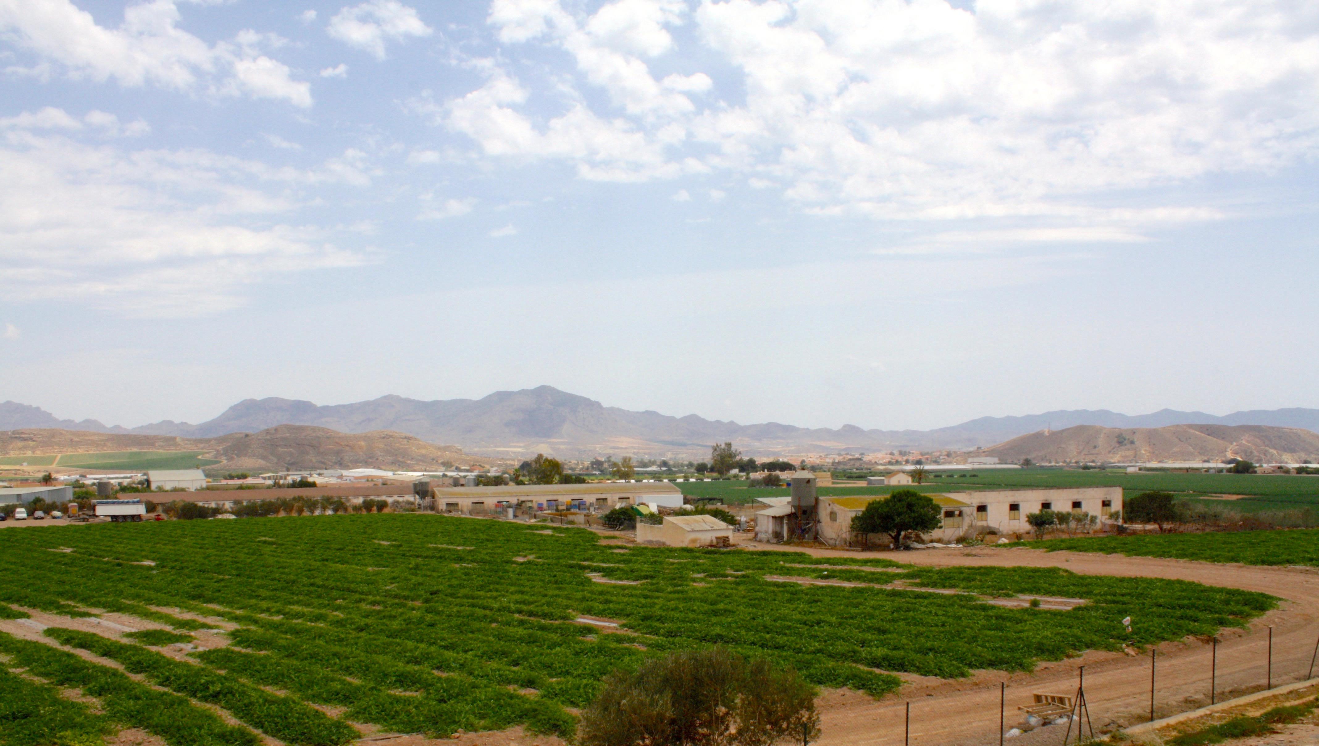 cultivos aire libre almanzora