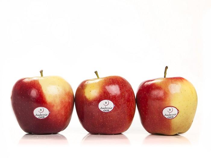 manzana ambrosia
