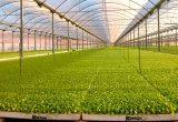 semillero adesur