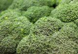 El brócoli, protagonista en las Jornadas Gastronómicas de Ribaforada y Funes