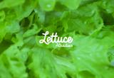 LETTUCE ATTRACTION mostrará el mundo de las verduras de hoja en Madrid