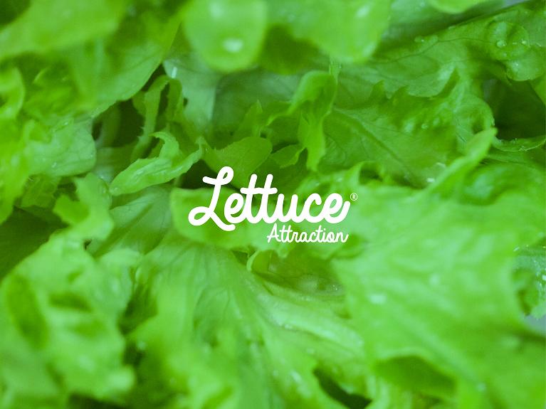 LOGOS-NEW-01 lettuce attraction