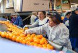 Taller de manipulación de cítricos para mujeres desempleadas