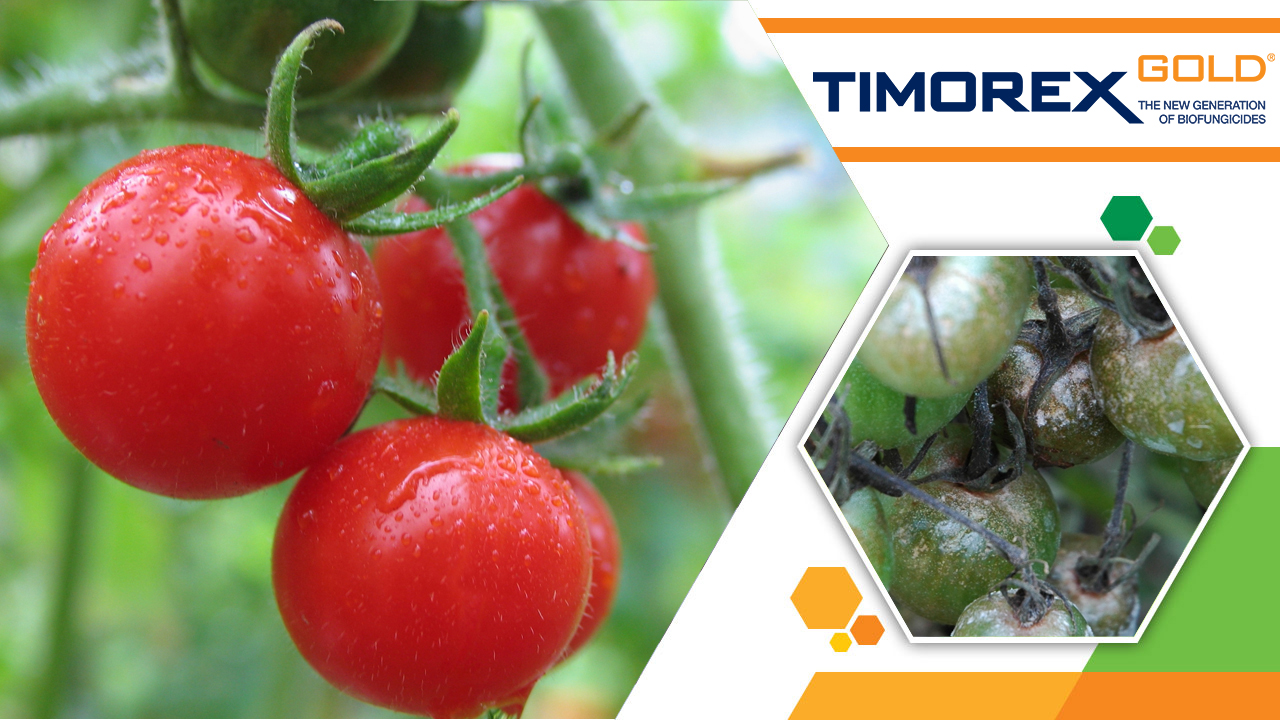 Stockton photo Timorex Gold for Tomatoes