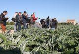 blogtrip de la Alcachofa de la Vega Baja