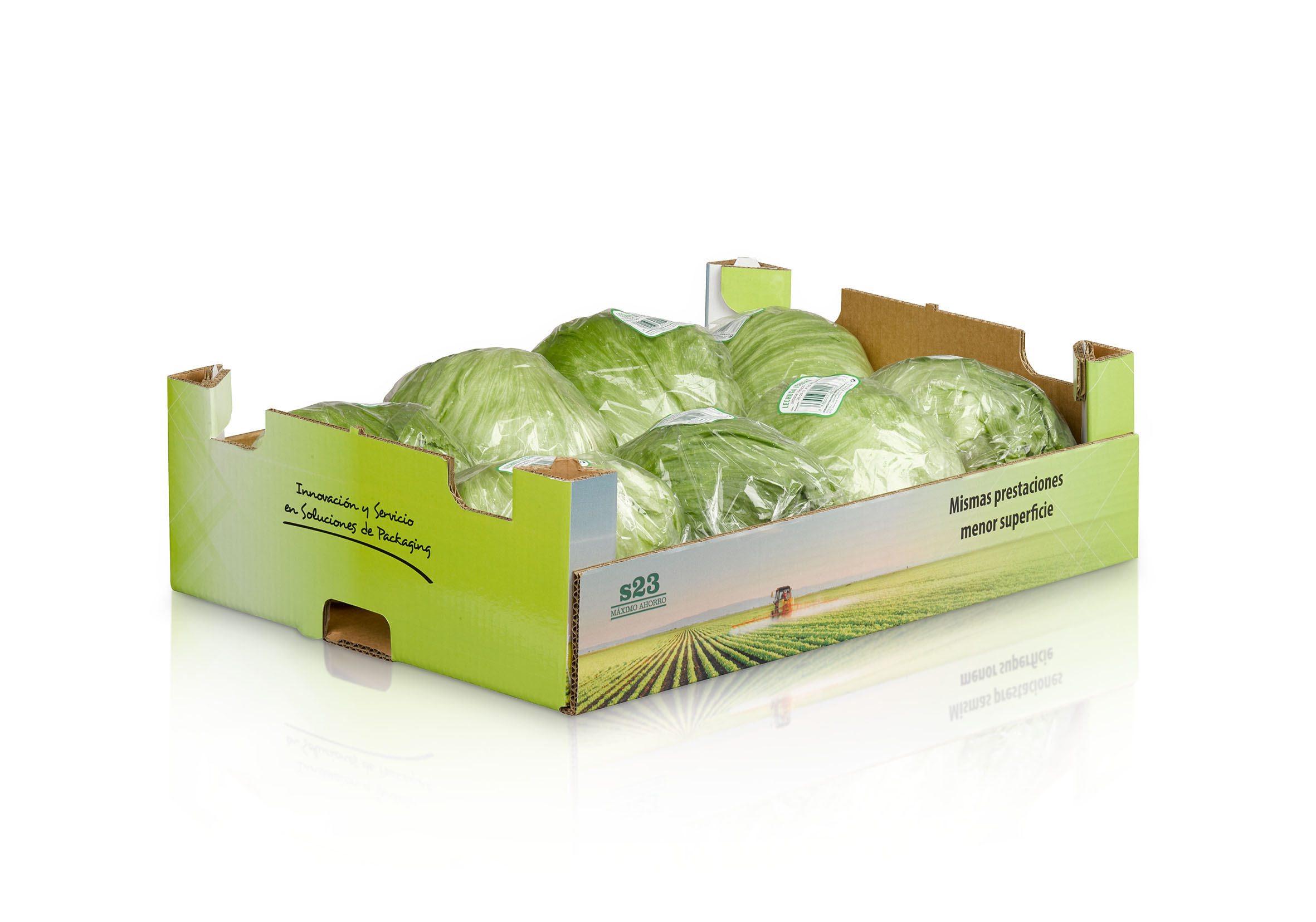 vegabaja caja s23 con lechugas