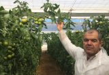 Juan Cruz, comercial de Zeraim, con la variedad de tomate beed Annabeth