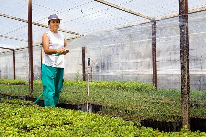 Invernadero plantas mujer riego