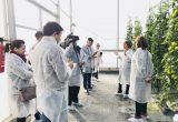 'Alimentos inteligentes', una de las líneas estratégicas de Tecnova