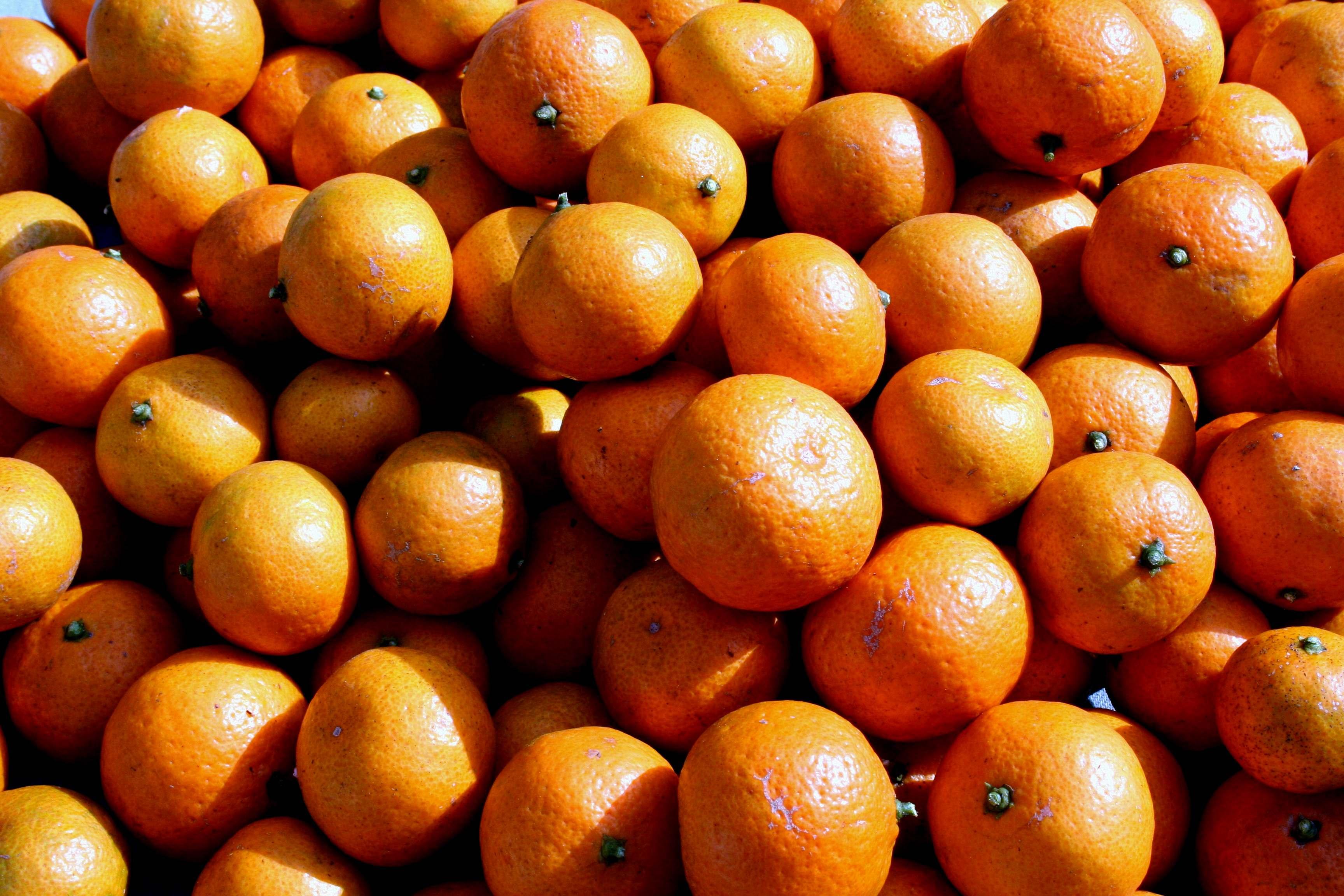 Satsuma_oranges