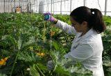 Tecnova obtiene la acreditación para realizar ensayos EOR de fitosanitarios