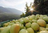 manzanas val venosta v.ip