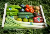benihort frutas hortalizas eco