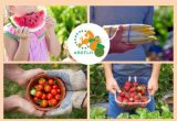 Regio'Com : the guide on the European best practices of fruit and vegetable promotion