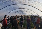 El proyecto Ferdoñana ahorra hasta un 40% de agua en el cultivo de berries