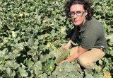 melón piel de sapo CLX MPO21 CLAUSE Murcia campo