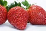 calinda fresa freshforward