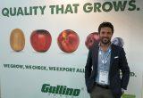Apples return to Gullino's strategic future