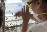 agrbío sala polinización abejorros