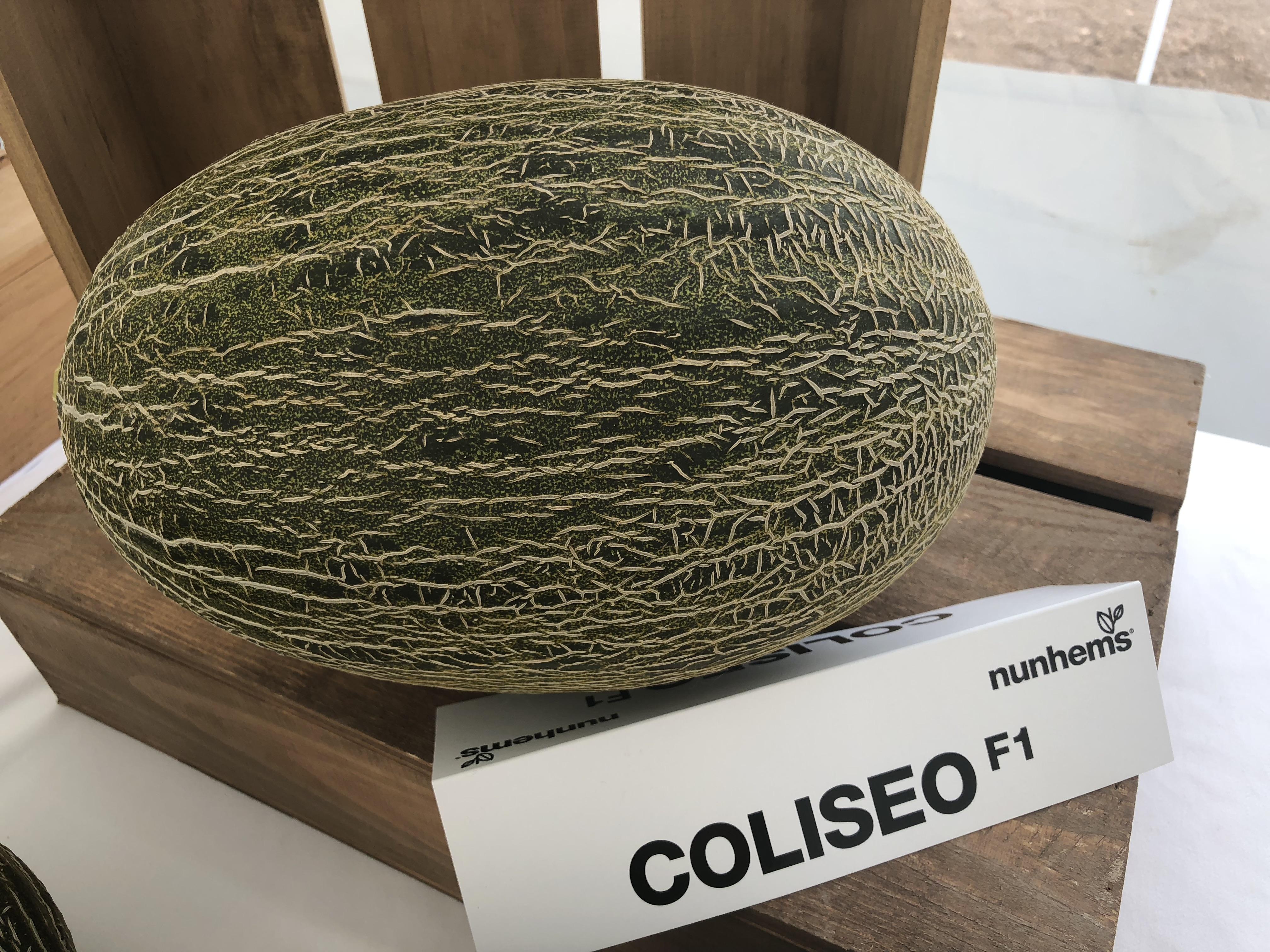 melón piel de sapo Coliseo F1 nunhems