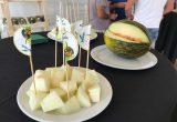 seminis melón mini
