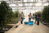 Mujeres en agricultura invernadero