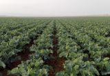 KPE crece con espárrago y bio