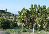 Las tropicales ganan peso en BioProcam