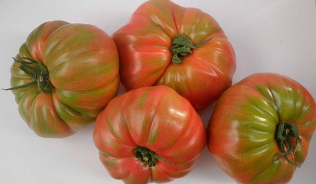tomate Prisco