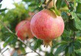 La granada, una superfruta que cuida el corazón