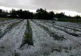 Las últimas tormentas han afectado la producción frutícola de Chile