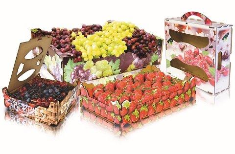 Gen Varios Fresa y maletines y berries uvas_B