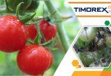 Stockton photo Timorex Gold for Tomatoes