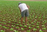campo agricultor