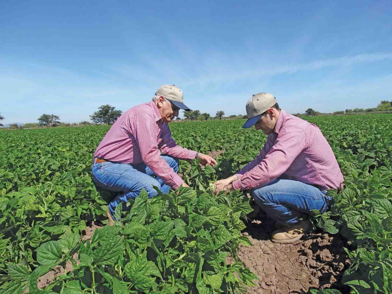 INGENIERO-AGROALIMENTARIO en campo