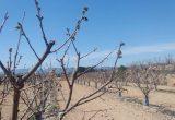 heladas valencia frutales campo