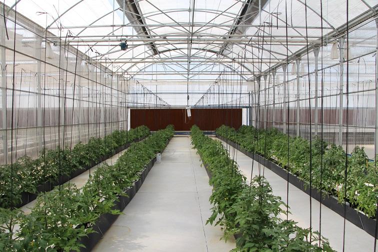 semillas fitó centro almeria Zona aislada destinada a patologías