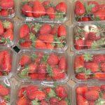 bandejas plastico packaging fresas
